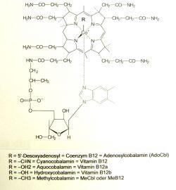 hohe vitamin b12 werte